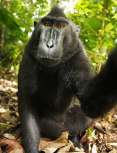 A seated macaque reaches out with one hand to the camera.