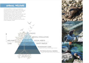 This page of the report focuses son animal welfare, including a pyramid of needs and photos of otters in a zoo.
